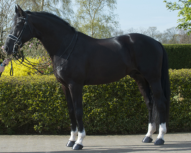 The breeding jigsaw puzzle: 5 factors that determine a good stallion