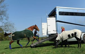 A digital passport for horses has been put forward as a solution to help smooth cross-border travel continue for competition, race and breeding horses from 2021
