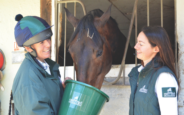 Would my horse benefit from a calmer? Spillers explains