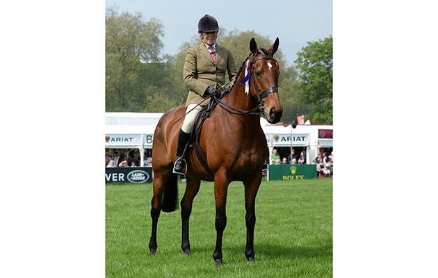 Katie Jerram riding Barber's Shop during the RoR Tattersalls Thoroughbred Ridden Show Horse Championship, where they were Champions during Thursday of the Royal Windsor Horse Show, in the grounds of Windsor Castle in Windsor in the county of Berkshire, UK  on 11th May 2016