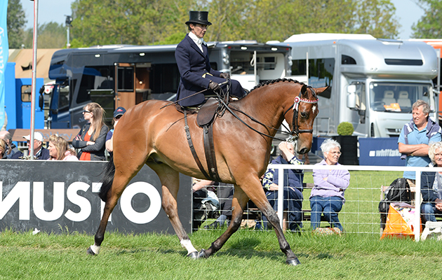Jayne Ross riding Broadshard Simplicity, Ladies Show Horse Championship during Friday of the Royal Windsor Horse Show, in the grounds of Windsor Castle in Windsor in the county of Berkshire, UK  on 13th May 2016