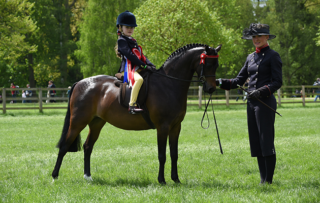 Matilda Holmes riding Hollybush Enchantment, Champion in the Mini Show Pony Championship during Saturday of the Royal Windsor Show, in the grounds of Windsor Castle in Windsor in the county of Berkshire, UK  on 14th May 2016
