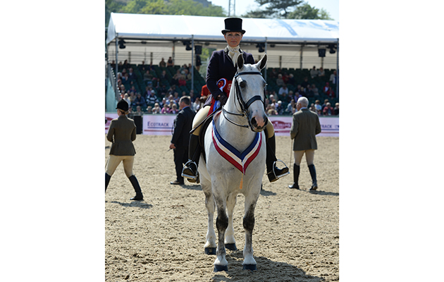 Victoria Hesford riding Randalstown Musketeer, Champion Cob Championship during Friday of the Royal Windsor Horse Show, in the grounds of Windsor Castle in Windsor in the county of Berkshire, UK  on 13th May 2016