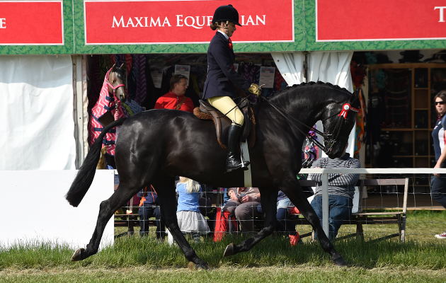 Lizzie Smith riding Rathnaleen Gothic, Champion in The Intermediate Championship during Wednesday of the Royal Windsor Show, in the grounds of Windsor Castle in Windsor in the county of Berkshire, UK  on 15th May 2016