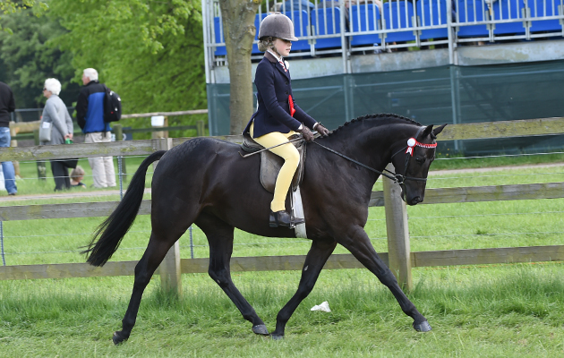 Charlotte Tuck riding RhoscElodie, Champion in the Novice Show Pony Championship during Saturday of the Royal Windsor Show, in the grounds of Windsor Castle in Windsor in the county of Berkshire, UK  on 14th May 2016