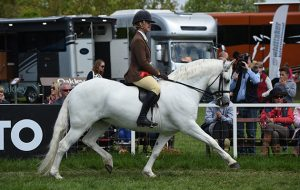 Hannah Horton riding Slieve Bloom Jill, Champion Native BSPS Heritage Ridden Championship during Saturday of the Royal Windsor Show, in the grounds of Windsor Castle in Windsor in the county of Berkshire, UK on 14th May 2016