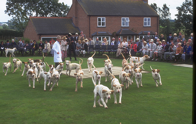 Quorn Puppy Show 1999. Hunting hounds.