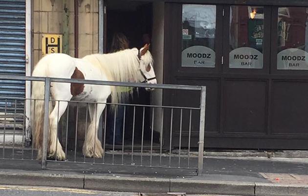 horse in bar
