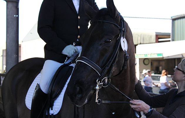 Steve Wallace's dressage blog: combating equine nerves to allow talent to shine
