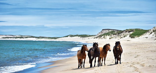 29 Things You Need To Know About The Wild Horses Of Sable Island