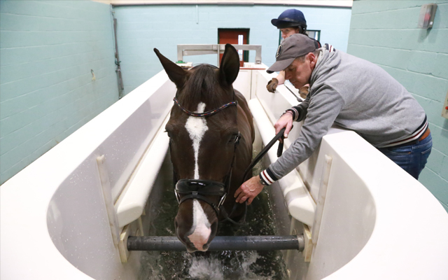 Valegro-in-water-treadmill