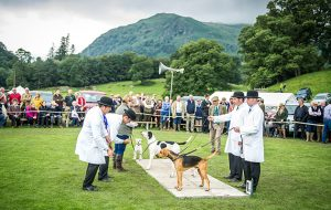 Judges preside over the supreme show championship, choosing between the champions from each of the terrier, beagle, harrier and Fellhound rings