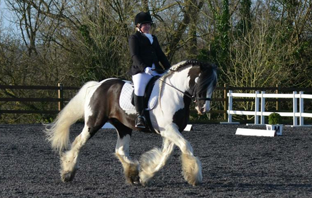 """""""This is my dressage cob who loves nothing better than strutting his stuff to music scoring 76% in BD novice freestyle dancing to Dolly Parton."""" — Georgie Lucas"""