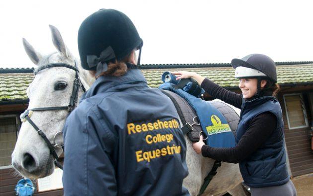 Equine Studies top 10 degrees