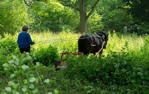 working horse trust
