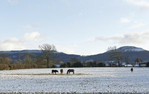 Turn out in field turning out snow winter cold frost