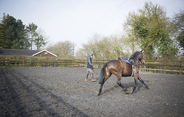 How to lunge a horse: top tips