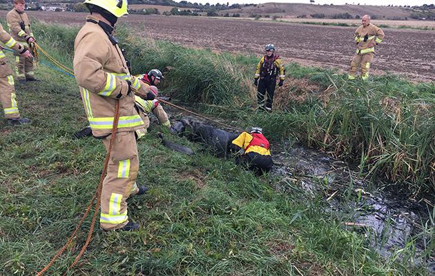 horses rescued sewage