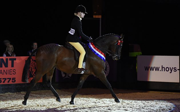 Phoebe Price riding LITTON ENTERPRISE owned by Joanne Price, Champion in the Supreme Pony of The Year Championship during HOYS in the NEC in Warwickshire in the UK on 9th October 2016