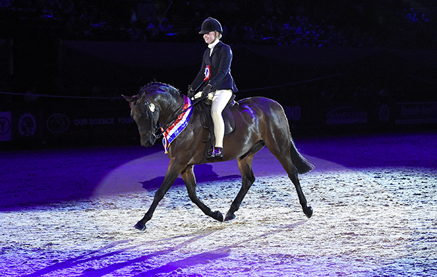 Jessica Renshaw-smith riding WYCROFT NEW DIMENSION owned by M.A. Mackay, Champion in the Show Hunter Pony of the Year Championship Final during HOYS in the NEC in Warwickshire in the UK on 9th October 2016