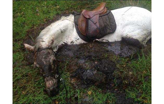 pony rescued bog