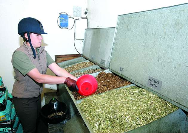 WOMAN IN RIDING HELMET SCOOPING CHAFF FROM A FEED BIN INTO A BUCKET /SKIP