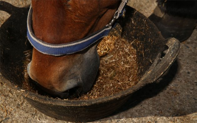 spillers-horse-easting-hay