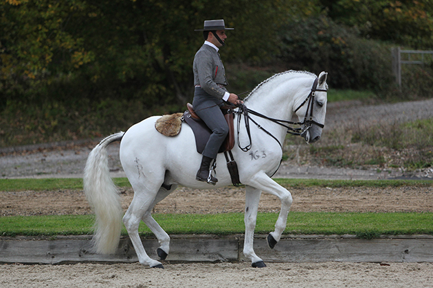 How Clued Up Are You About One Of The Oldest Horse Breeds In The