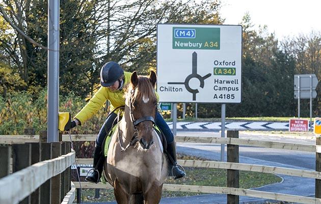 horse road crossing