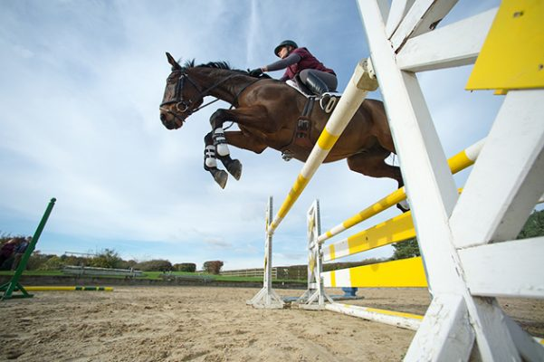 Boost your ex-racehorse's showjumping skills and overall ...