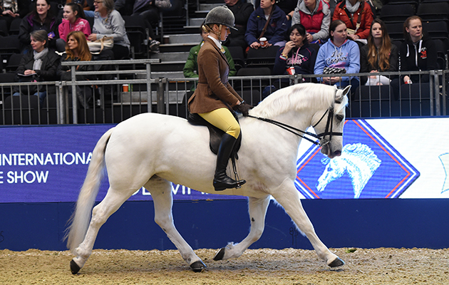 Sleeve Bloom Jill (105), exhibited by Hannah L Horton for the owner Lady Huntingdon; during the BSPS Ridden M&M Championship at the Olympia International Horse Show at Olympia, London, UK; on 19 th December 2016