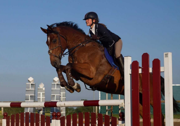 Wonderful warmbloods that will make you say wow (and want to buy them too)
