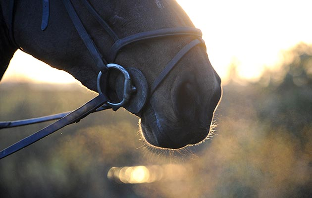 6 reasons why it's OK to miss a horse you've lost (however much time has passed) - Horse & Hound