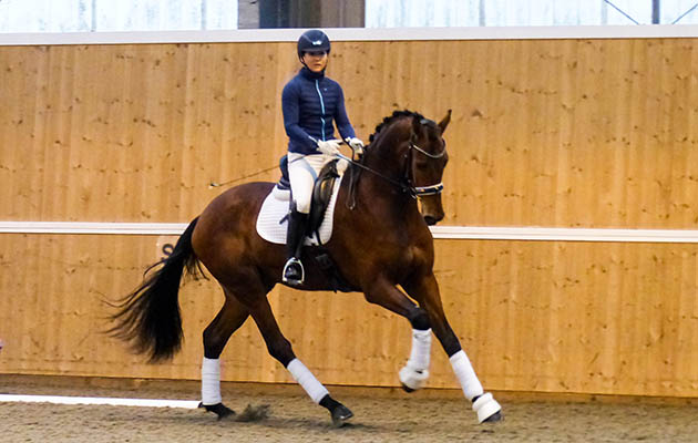 What the judges are looking for in a four-year-old dressage class