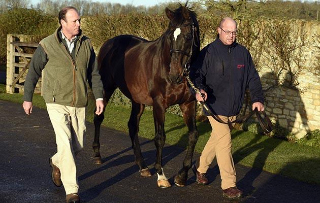 Kayf Tara, TB stallion