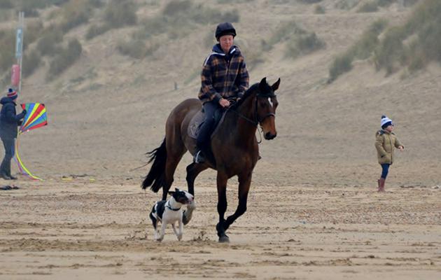dog attacked horse