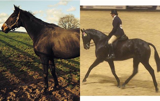 Tranter horse Пластинчатые теплообменники Машимпэкс (GEA) серии NW Железногорск