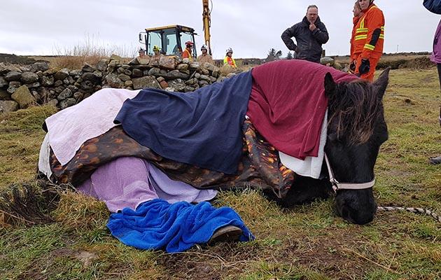 horse cliff rescue