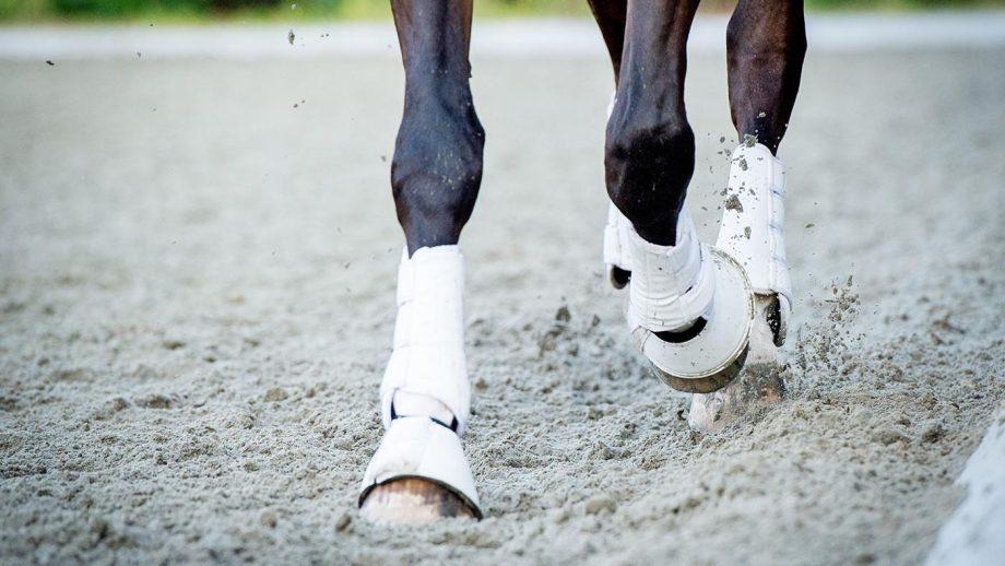 Horse training: extended trot