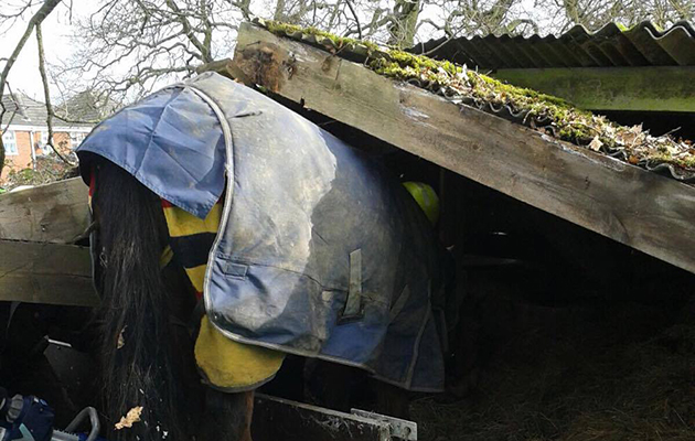 Lucky escape for mare who tried to climb on derelict roof - Horse & Hound