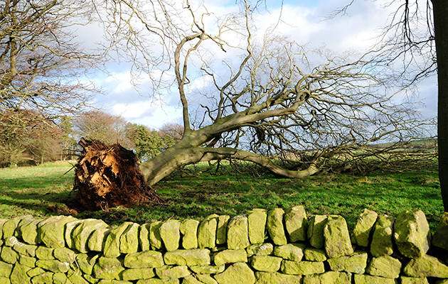 DNG53M Beeley Moor,Derbyshire,UK.27th December 2013.During the night many trees and property were damaged by gale forces winds across the Peak District. Credit: Ian Francis/Alamy Live News