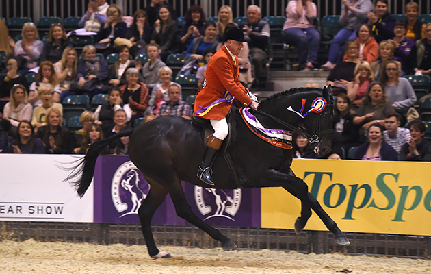 Allister Hood riding JACK THE GIANT owned by The Jackpots, Champion in the Race Horse to Riding Horse of the Year Championship during HOYS in the NEC in Warwickshire in the UK on 8th October 2016