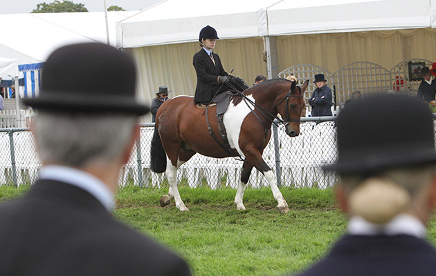 Judging of the Ladies side saddle Edenbridge & Oxted Show