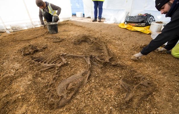 Iron Age horses