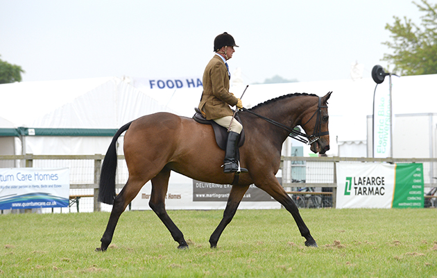 Horse No 221; Hoppy Jumping ALLISTER Hood Champion in the Light Weight Hunter Championship and over all Hunter Champion during the Hertfordshire County Show near Redbourn, Hertfordshire, UK between 23th-24th May 2015