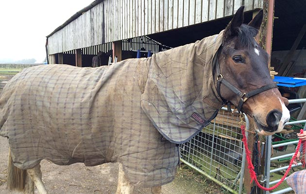 A Versatile And Robust Turnout Rug That S Still Perfect One Year On Review Horse Hound