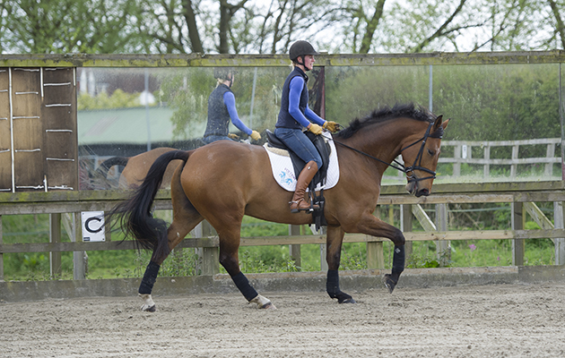 "Dressage lesson at Littleton Manor - Steph Lord riding""It's A Rap""(Oscar) with trainer Kirsty Mepham"
