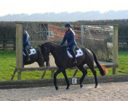 training exercises for young horses