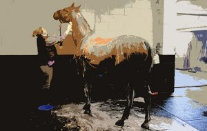 Talking point (Winner of Small Hunter), being washed by Nick and Gemma