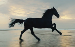 Lloyds Bank advert black horse